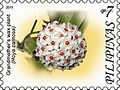 Hoya carnosa 2011 stamp of the Philippines.jpg