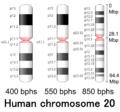 Human chromosome 20 - 400 550 850 bphs.png
