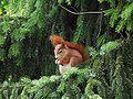 Hungriges Eichhörnchen.JPG