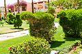 Hurghada, Qesm Hurghada, Red Sea Governorate, Egypt - panoramio (173).jpg