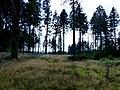 Idarwald – Nähe Idarkopf - panoramio (1).jpg