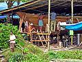 India-7702 - Flickr - archer10 (Dennis).jpg