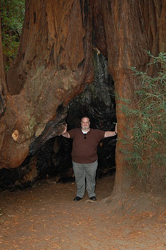 Redwood Grove - A large burn-scar at the base of a redwood tree showing the fire-retardant and healing properties of the bark.