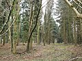Inside Queen's Copse - geograph.org.uk - 297513.jpg