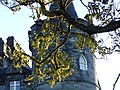 Inveraray Castle - panoramio - Tanya Dedyukhina.jpg