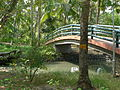 Island Kerala.JPG