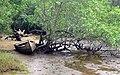 Itamambuca - Ubatuba (2425582463).jpg