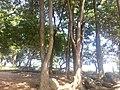 Itupeva - SP - panoramio (3003).jpg