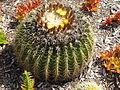 Izrael, Hafia, Bahai zahrady, kaktus.JPG