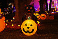 Jack-o'-lantern Black Cat.JPG
