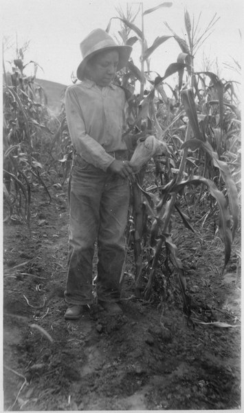 File:Jacob Jordan in his 4-H cornfield - NARA - 285863.tif