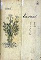 Japanese Herbal, 17th century Wellcome L0030093.jpg