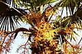 Jardí botànic de Sóller - panoramio.jpg