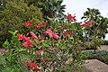 Jardim Botânico da Madeira DSC 0197 (14677049066).jpg