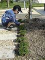 Jardin de poche equiterre 2.jpg