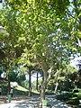 Jardins de Joan Brossa - Barcelona 13.JPG