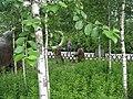Jurapark Baltow, Poland (www.juraparkbaltow.pl) - (Bałtów, Polska) - panoramio (77).jpg