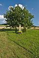 Kříž v polích nad obcí jižně od vesnice, Velenov, okres Blansko.jpg
