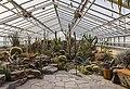 Kaktushaus, Jardín Botánico de Múnich, Alemania, 2013-01-27, DD 01.JPG