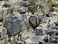 Kamenná koule v kamenolomu u Mostů u Jablunkova.jpg