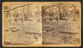 Kansas grasshoppers, from Robert N. Dennis collection of stereoscopic views.png