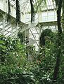 Kew Palm House.JPG