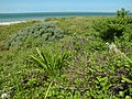 Key West NWR and native plants (5147960261).jpg