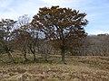 Kimigahatacho, Higashiomi, Shiga Prefecture 527-0202, Japan - panoramio (35).jpg