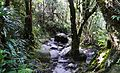 Kinabalu - Cloud Forest.jpg
