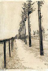 Szpaler drzew wzdłuż drogi