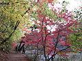 Kobe Municipal Arboretum in 2013-11-16 No,12.JPG