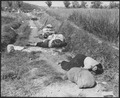 Korean civilians fleeing from the North Korean forces, killed when caught in the line of fire during night attack by... - NARA - 531369.tif