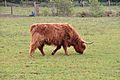 Kreis Pinneberg, Naturschutzgebiet WDPA-ID 165841 Tävsmoor-Haselauer Moor 04.jpg