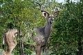 Kruger National Park, South Africa (8341012927).jpg