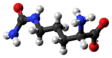 Ball and stick model of zwitterionic citrulline
