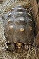 La-Palmyre-zoo 132-tortue.jpg