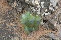La Palma - El Paso - LP-301 - Llano del Jable 21 ies.jpg