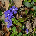 La primavera si fa strada (16711111997).jpg