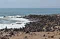 Lachtani na Cape Cross - Namibie - panoramio (3).jpg