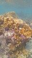 Laika ac Playa Kalki (11879591745).jpg