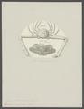 Lambrus longimanus - - Print - Iconographia Zoologica - Special Collections University of Amsterdam - UBAINV0274 095 04 0014.tif