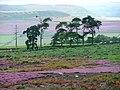 Laskill Pasture Moor - geograph.org.uk - 45101.jpg