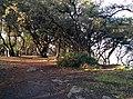 Le Bois de la Chaise 1.jpg