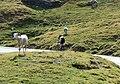 Le col du Tourmalet en aout 05.jpg