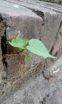 Leaves in a crack in Rishikesh - Grow at any cost.jpg
