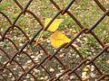 Leaves in the net.jpg