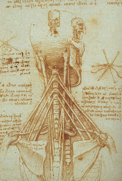 renaissance science drawings - HD 1200×1590