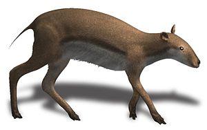 History of Leon County, Florida - Leptomeryx lived in Florida 23—15 Ma