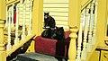 Les chats noirs de la jolie maison jaune. - panoramio.jpg