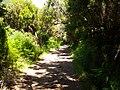 Levada do Risco, Madeira, Portugal, June-July 2011 - panoramio (10).jpg